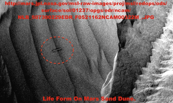 'Alien Worm' found on Mars!